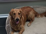 Ginger - Female - 9 Months